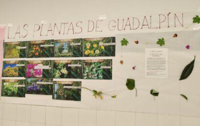 Floralia 2021. Mito y plantas